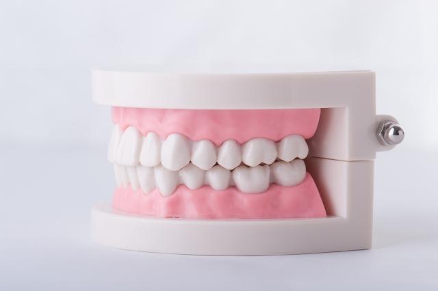 顎の骨の成長が利用できる